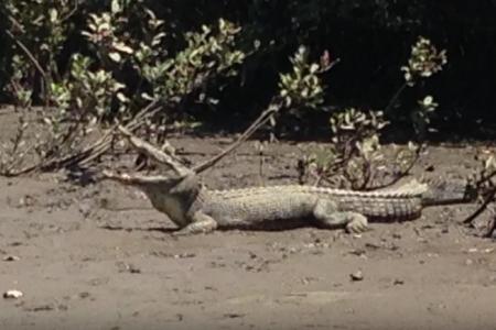 Cape Tribulation Crocodile Cruise
